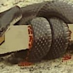 THE SNAKE vs THE SAW: A STORY ABOUT CONSEQUENCES